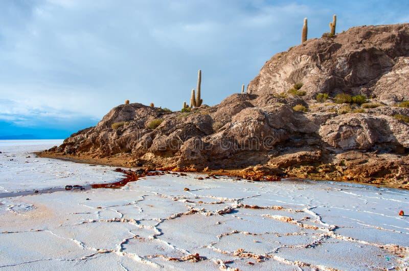 Incahuasi island in Salar de Uyuni. Bolivia. Incahuasi island in Salar de Uyuni, Bolivia royalty free stock image