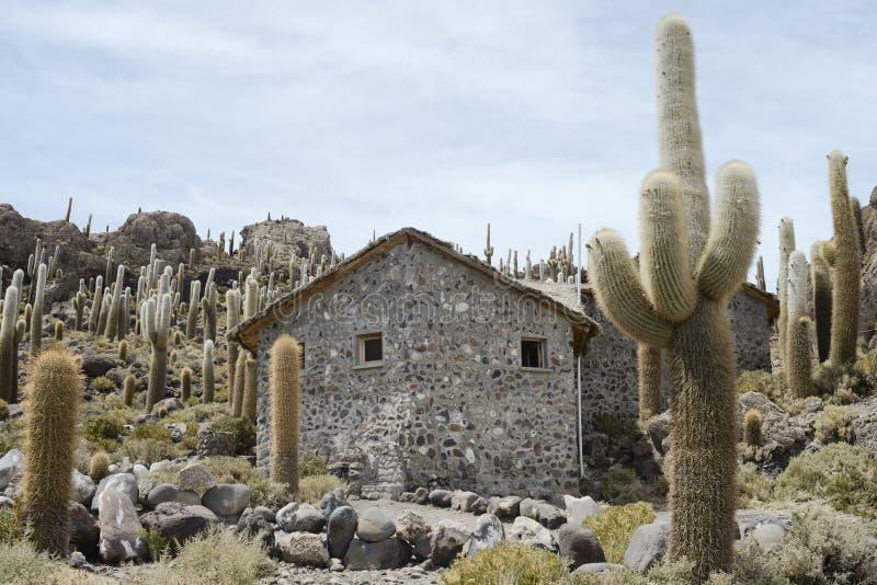 Incahuasi Island at Salar de Uyuni, Bolivia. Large Cactus at Incahuasi Island, Salar de Uyuni, Bolivia royalty free stock photos