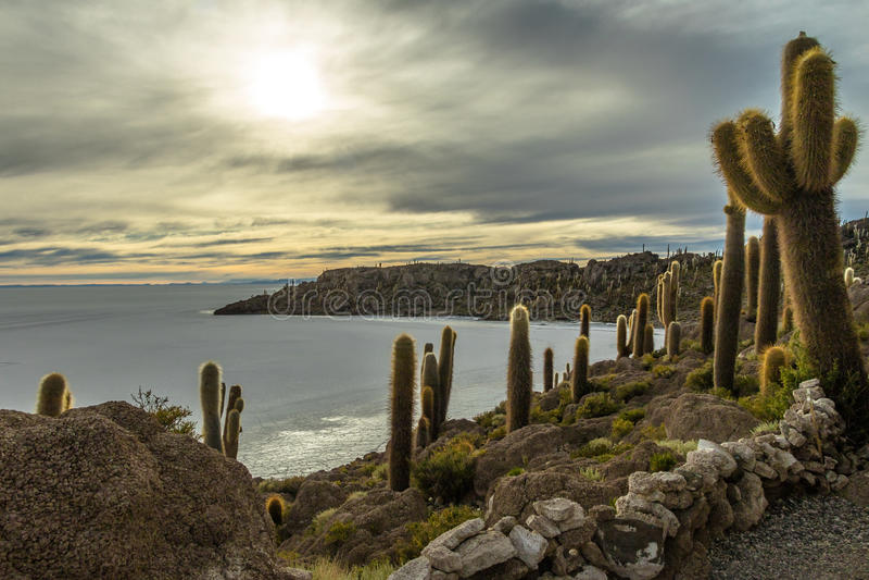 Incahuasi Kaktusowa wyspa w Salar De Uyuni soli mieszkaniu - Potosi dział, Boliwia fotografia royalty free