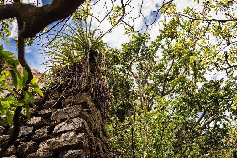 Incan wall covered in foliage, along the Inca trail. royalty free stock images