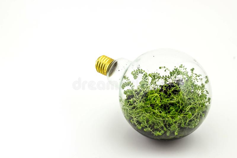 Incandescent bulbs with plants planted inside. stock photography