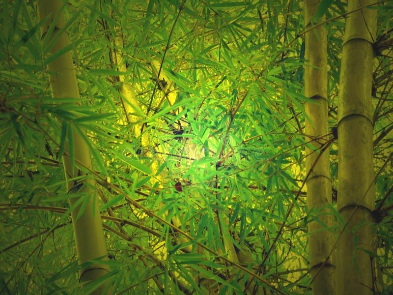 Incandescenza di bambù fotografia stock
