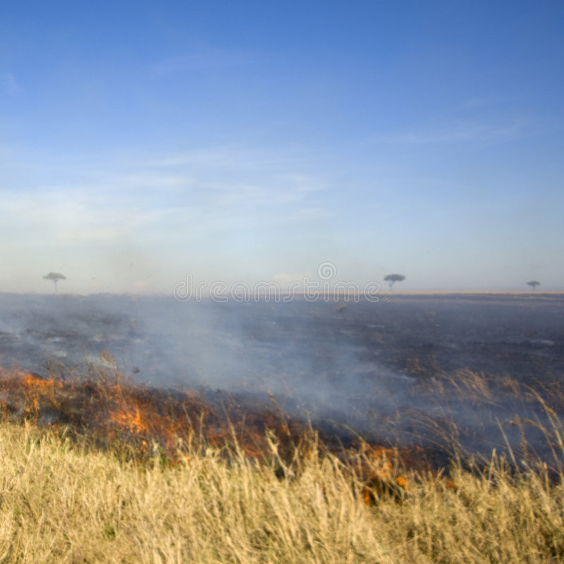 Incendie au masai mara Kenya image libre de droits