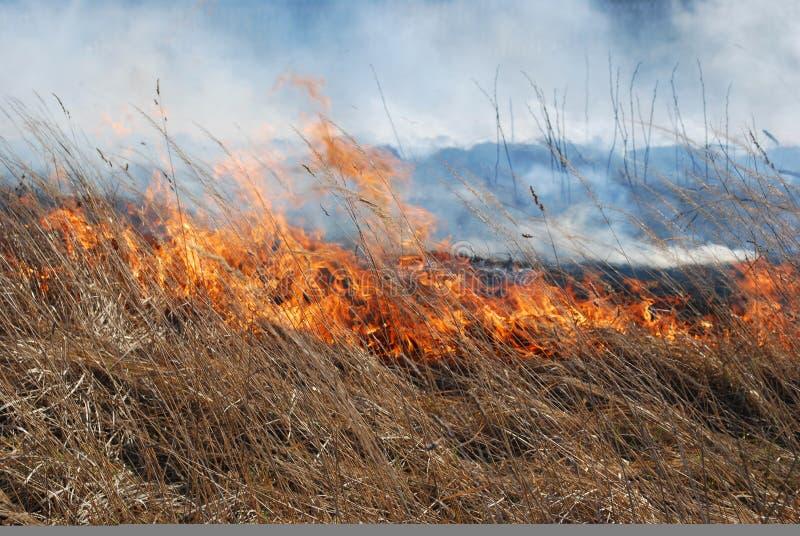 Incendie d'herbe photos libres de droits