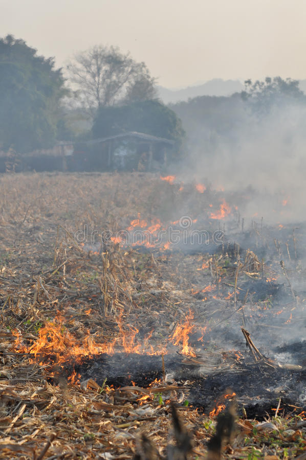 Incendie dans le domaine de maïs après moisson photos stock
