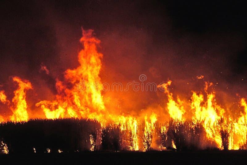Incendie De Canne à Sucre Image libre de droits