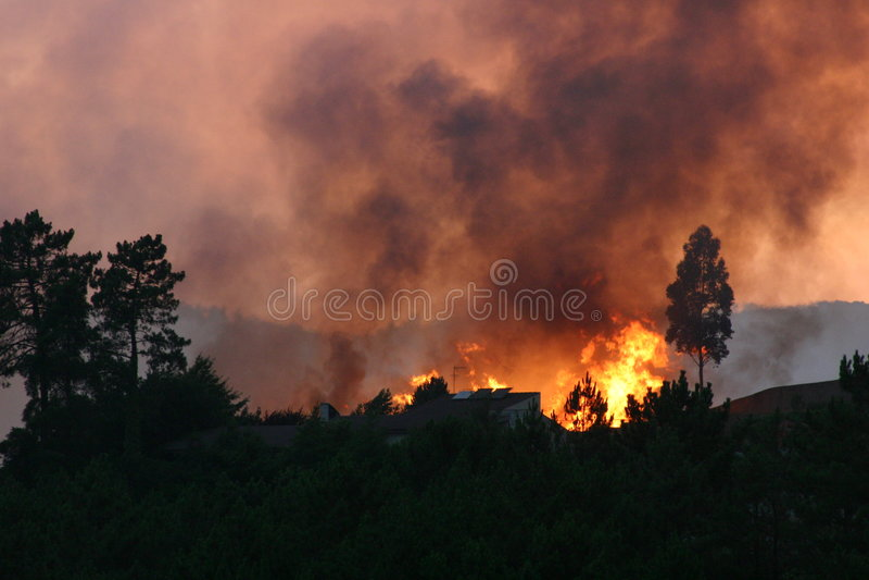 Download Incendie de forêt photo stock. Image du arbre, fumée, couleurs - 68282