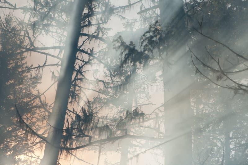 Download Incendie de forêt photo stock. Image du éclats, arbres - 8657540
