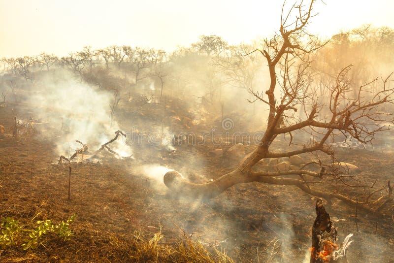 Incendie de forêt avec de la fumée photos libres de droits