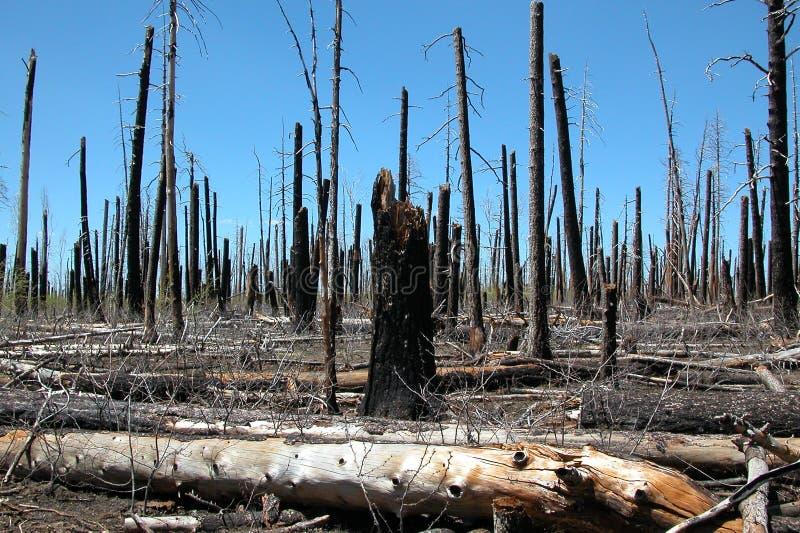 Incendie de forêt négligent images libres de droits