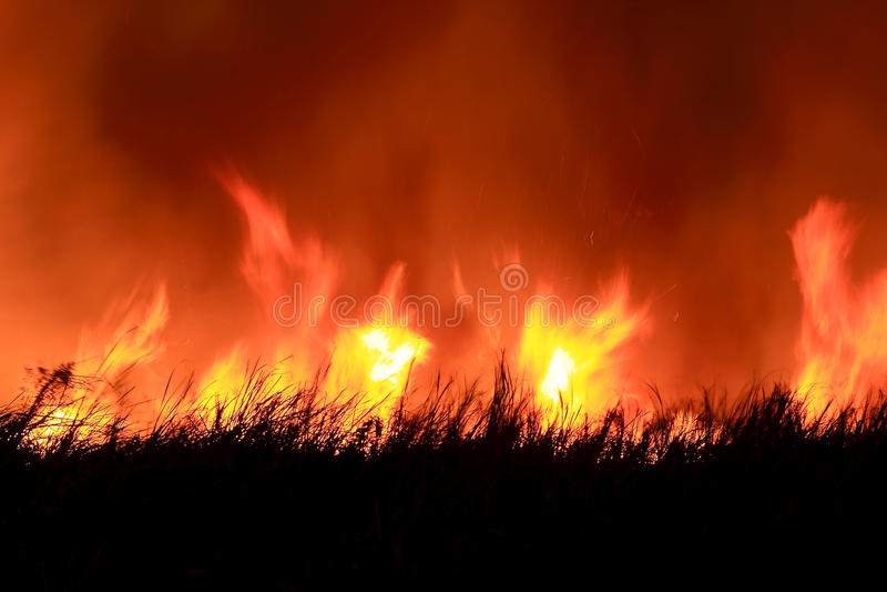 Incendie de forêt neuf image stock