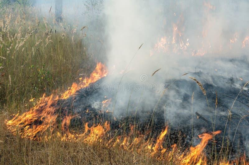 Incendie de forêt pendant l'été photo libre de droits