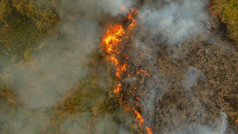 Incendie de forêt de vue aérienne Busuanga, Palawan, Philippines images stock