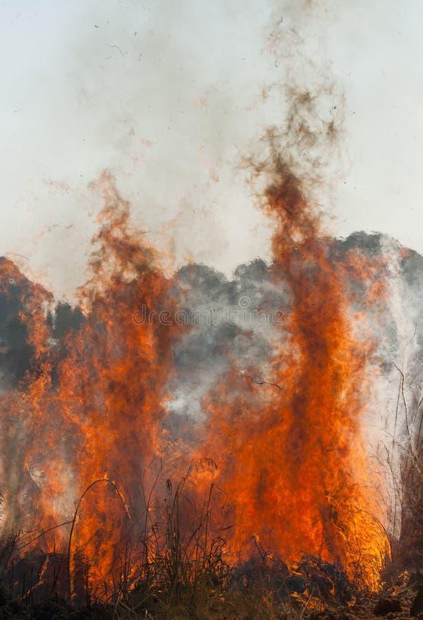 Incendie de plaine photos stock