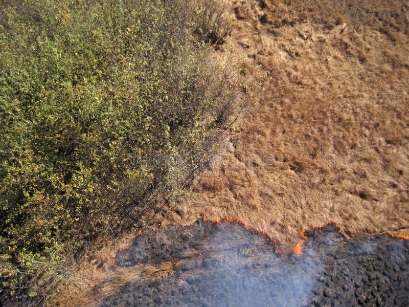 Incendie de plaine près des arbres photo libre de droits