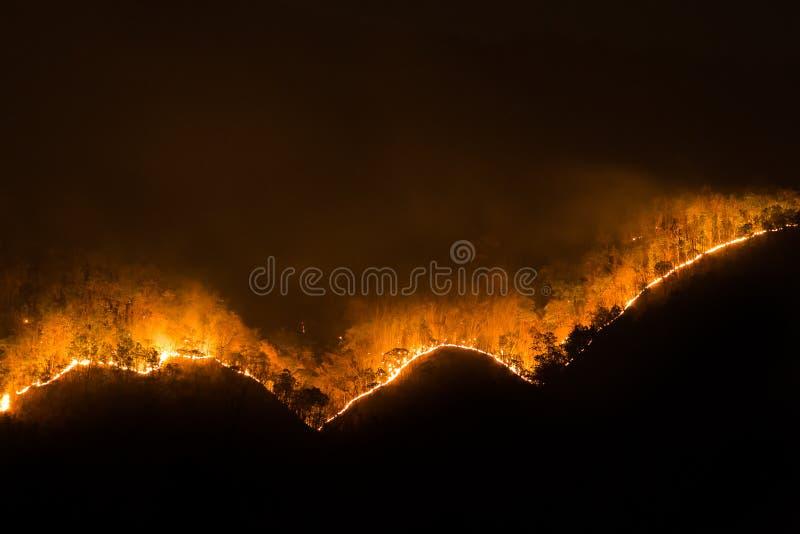 Incendie le feu de forêt, forêt brûlante de pin dans la fumée et flammes photo stock