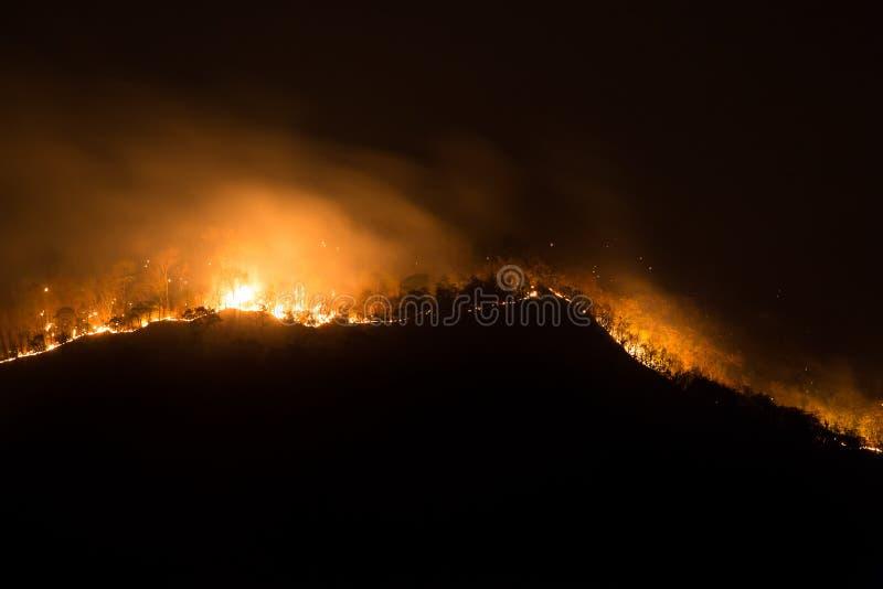 Incendie le feu de forêt, forêt brûlante de pin dans la fumée et flammes photographie stock