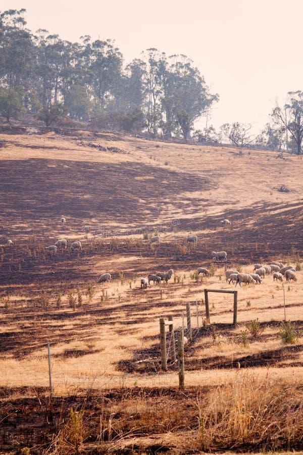 Incendie Tasmanie de Bush images stock