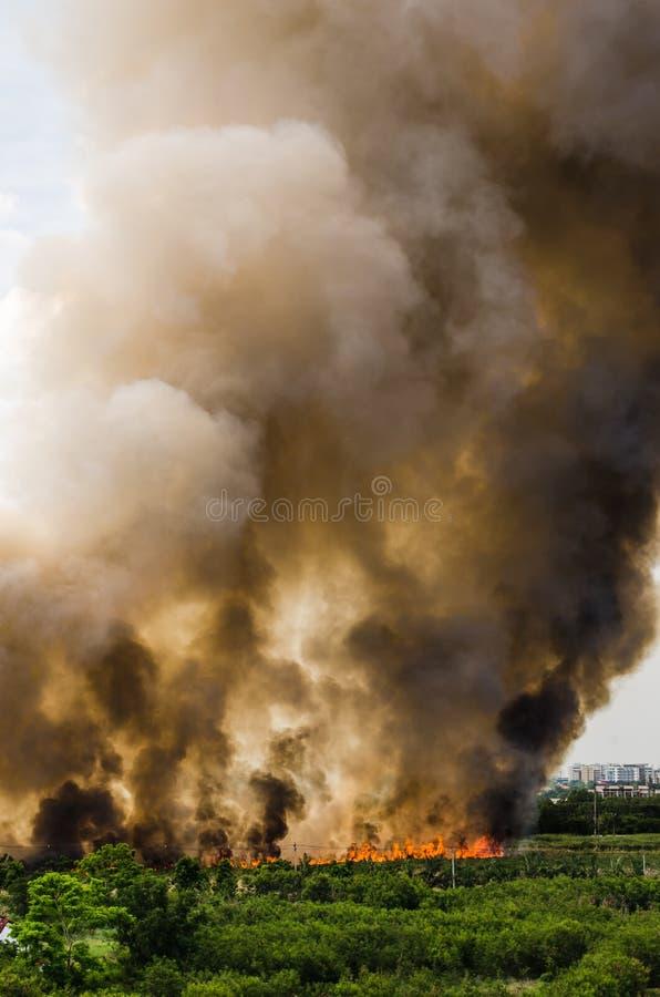 Incendies de forêt dans la ville sur une surabondance chaude Sapeur-pompier aidé à s'empresser d'empêcher le feu écarté au villag photographie stock