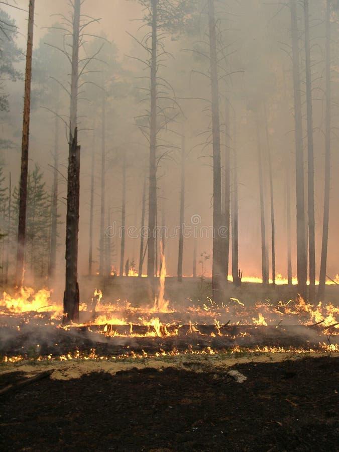 Incendio forestal fotos de archivo libres de regalías