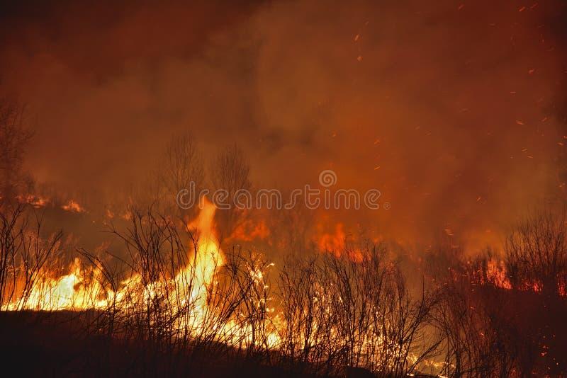 Incendio forestal 9 foto de archivo
