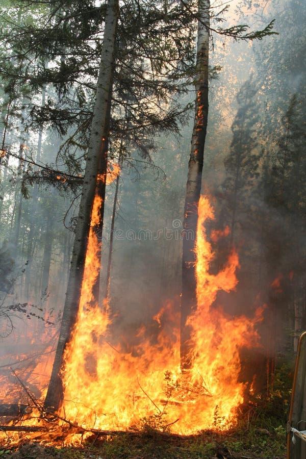 Incendio forestale immagine stock libera da diritti