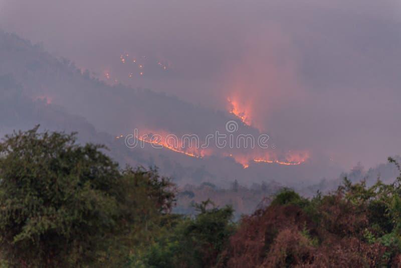 Incendio violento sulla montagna, Tailandia fotografie stock