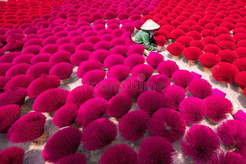Incense sticks drying outdoor with Vietnamese woman wearing conical hat in north of Vietnam.  stock photography