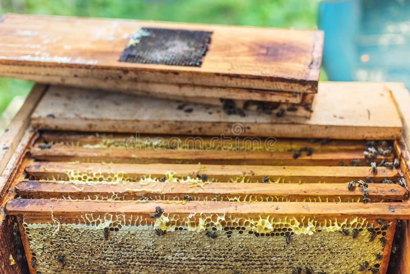 Inceri le strutture con miele nell'alveare, processo di ottenere il miele immagini stock libere da diritti