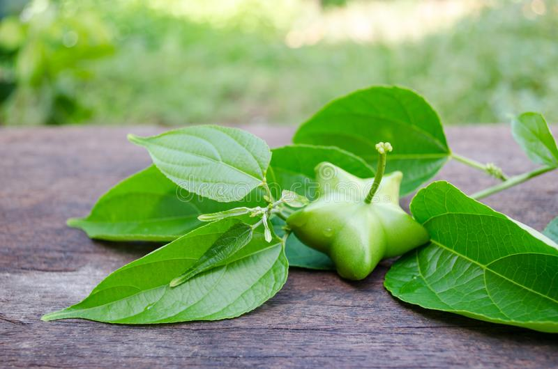 Inchi di Sacha, arachide di Sacha, arachide di inca, arachide della montagna o di sopra immagini stock libere da diritti