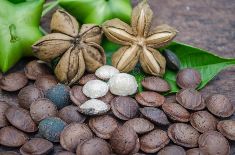 Inchi di Sacha, arachide di Sacha, arachide di inca, arachide della montagna o di sopra fotografia stock libera da diritti