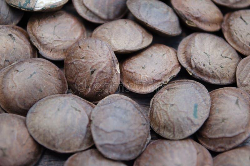 Inchi di Sacha, arachide di Sacha, arachide di inca, arachide della montagna o di sopra immagini stock
