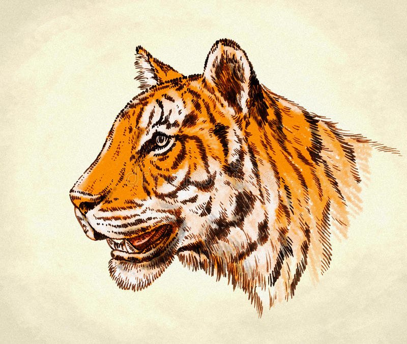 Incida l'illustrazione della tigre di tiraggio dell'inchiostro illustrazione vettoriale