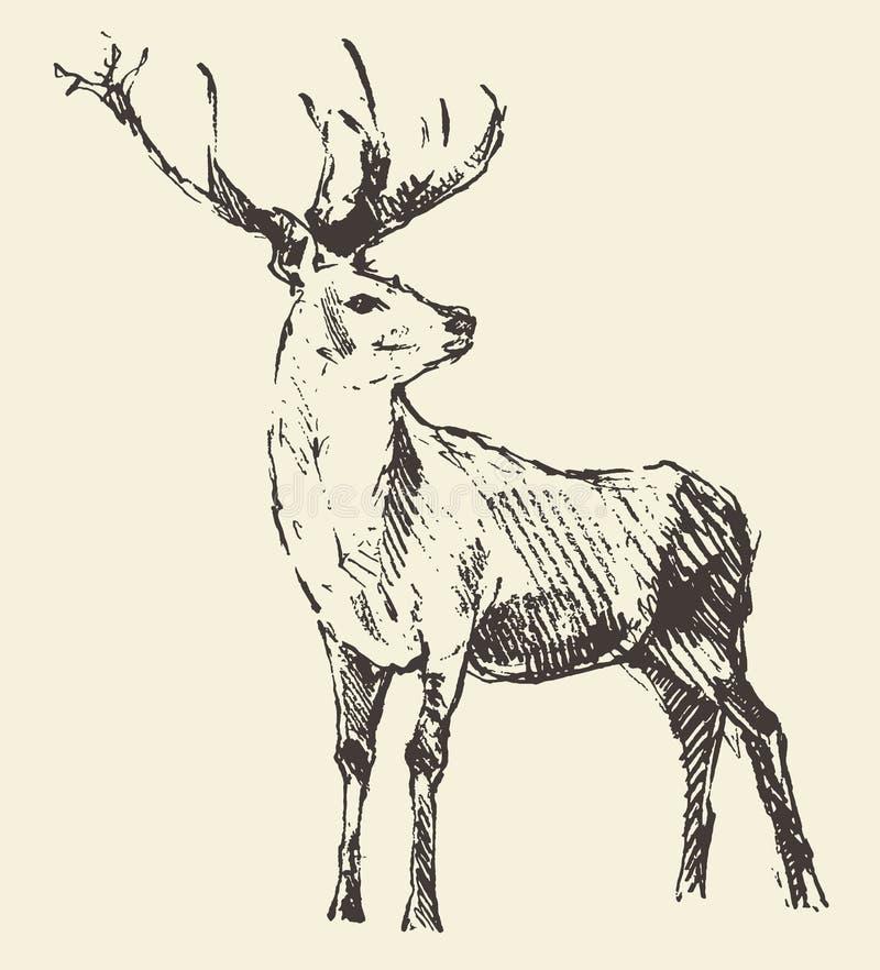 Incisione dei cervi, illustrazione d'annata, vettore illustrazione vettoriale