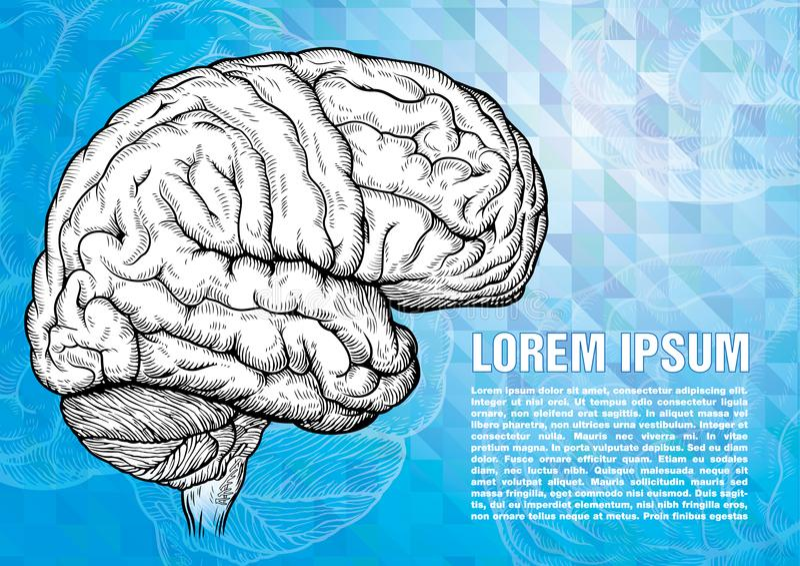 Incisione del cervello umano sul backgound moderno royalty illustrazione gratis