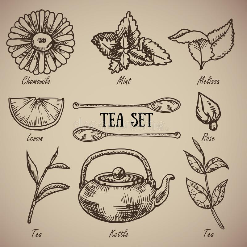 Incisione dell'insieme di tè: la camomilla, melissa, menta, limone, cucchiai, è aumentato, foglie di tè, bollitore Un insieme d'a illustrazione di stock
