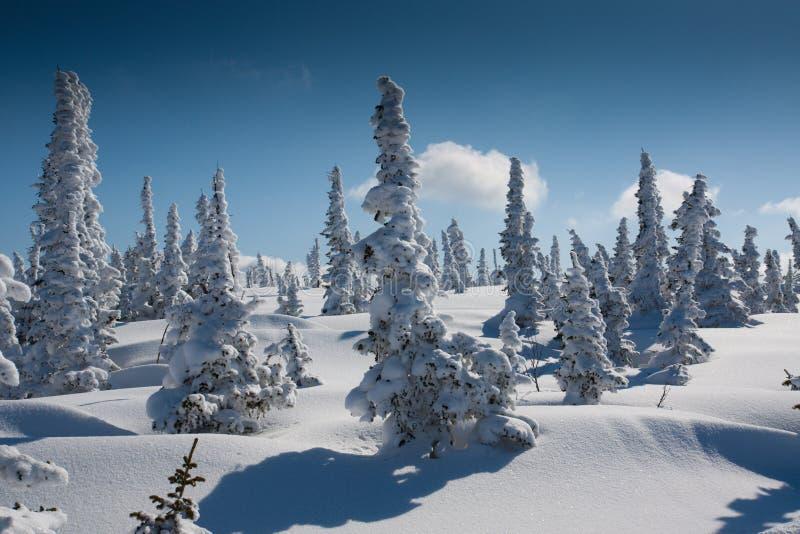 Inclinação alpina com árvore de pinho foto de stock royalty free