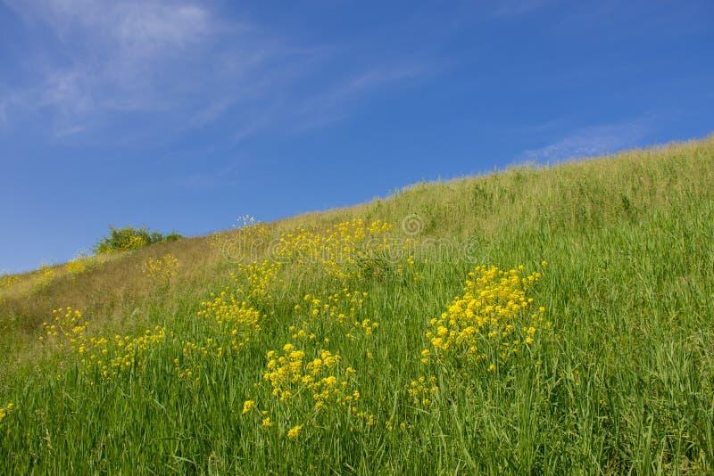 Inclinação de um monte verde e de um céu claro azul fotos de stock royalty free