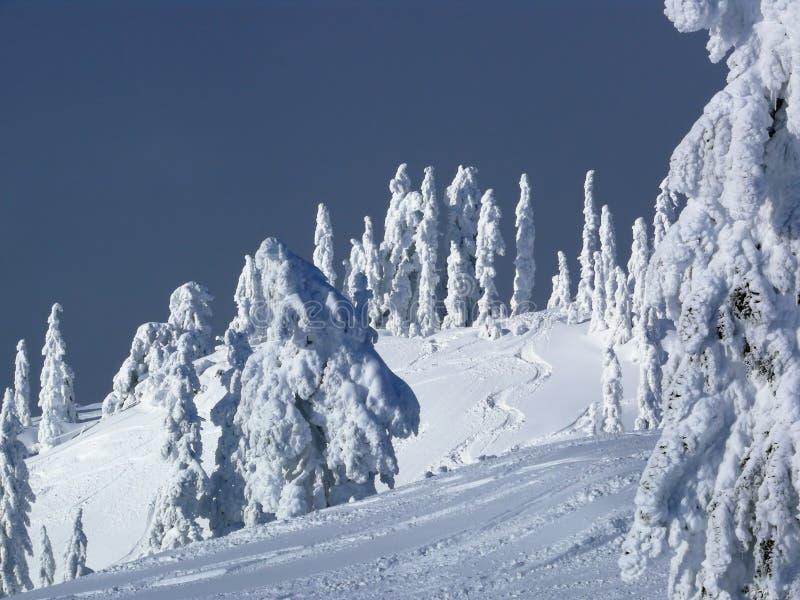 Inclinação do esqui com trilhas frescas foto de stock royalty free