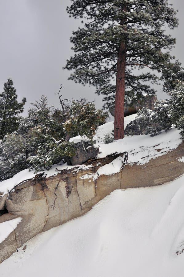 Inclinação nevado fotografia de stock royalty free