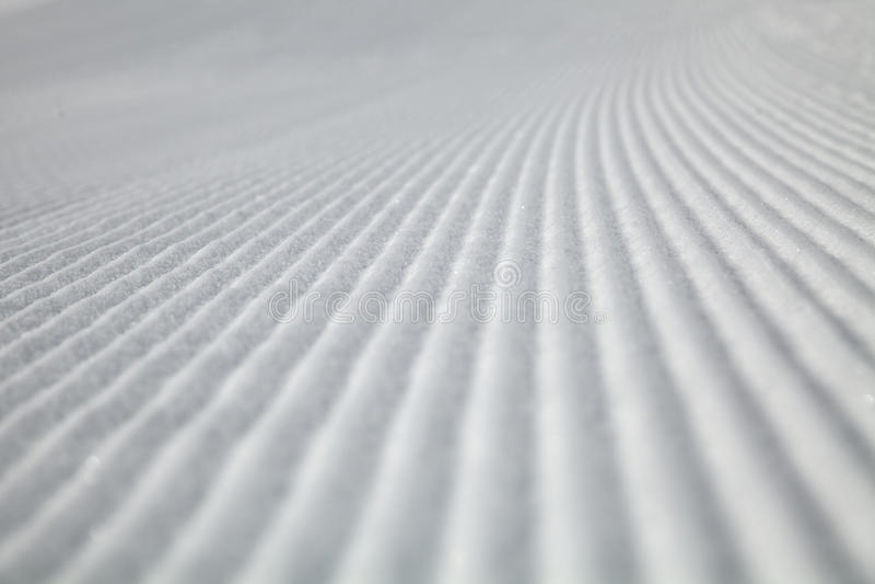 Fuga do gato da neve fotografia de stock