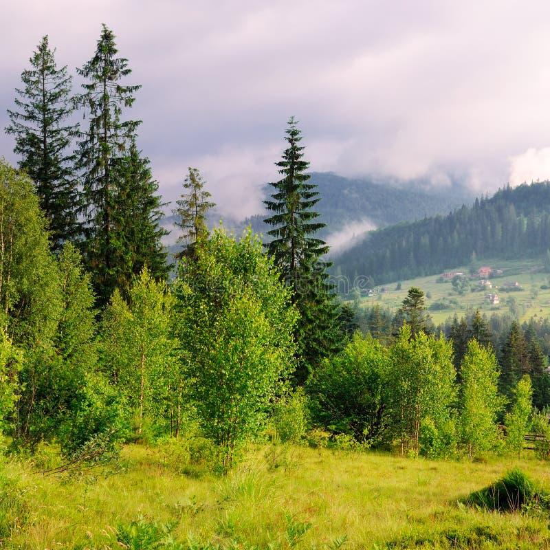 Inclinações das montanhas, de árvores coníferas e de nuvens no céu da noite imagens de stock
