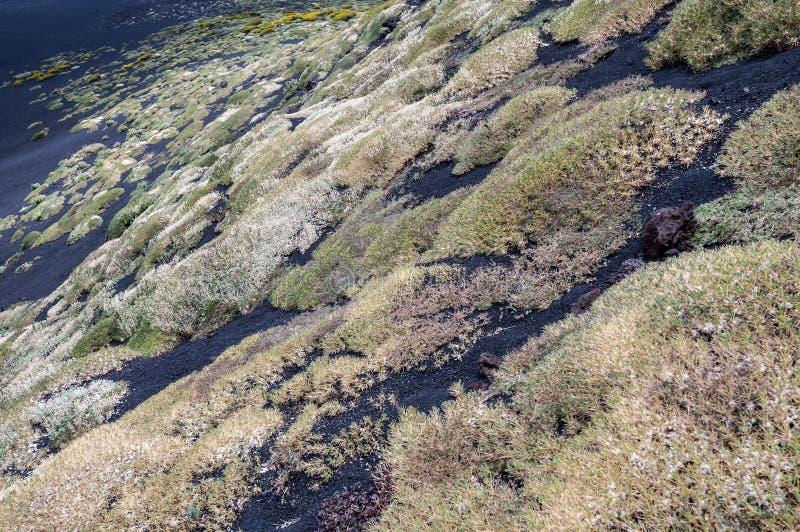 Inclinações do vulcão cobertas com os tapetes de várias plantas e flores foto de stock