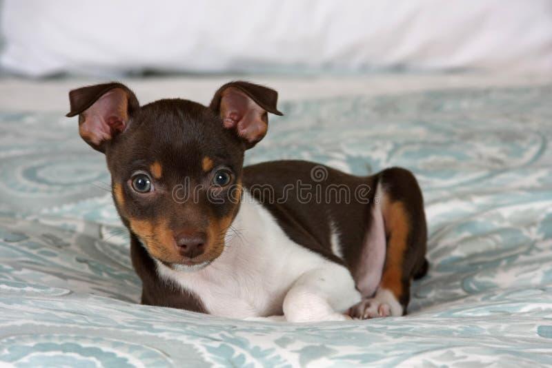 Inclinzione del cucciolo fotografia stock