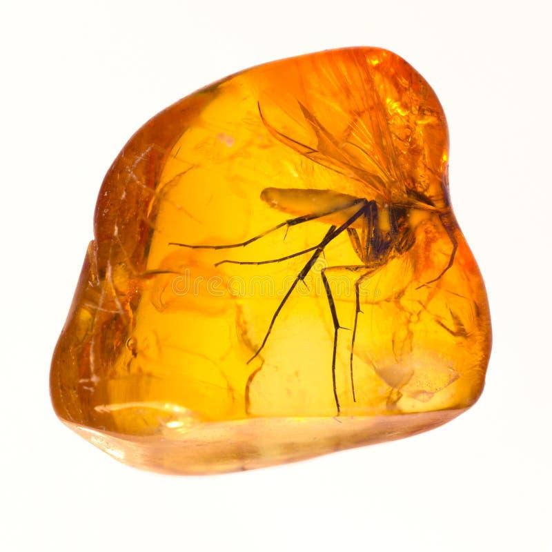 Inclusion en pierre ambre baltique images stock