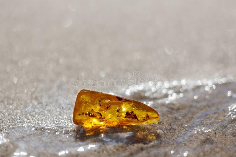 Inclusion en pierre ambre d'insecte de plage photographie stock libre de droits