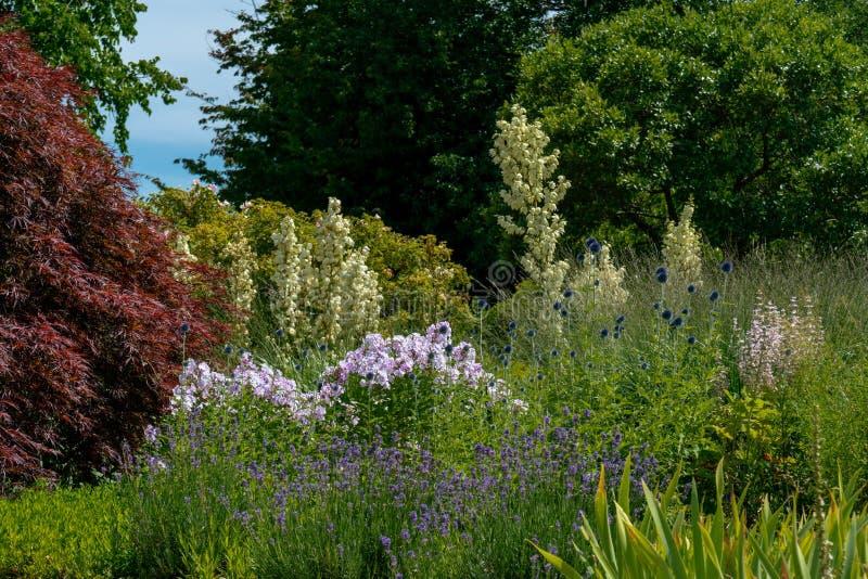 Inclusione scenica del letto di fiore di estate parecchia filamentosa, flox, cardi selvatici e lavanda bianchi dell'yucca fotografie stock libere da diritti