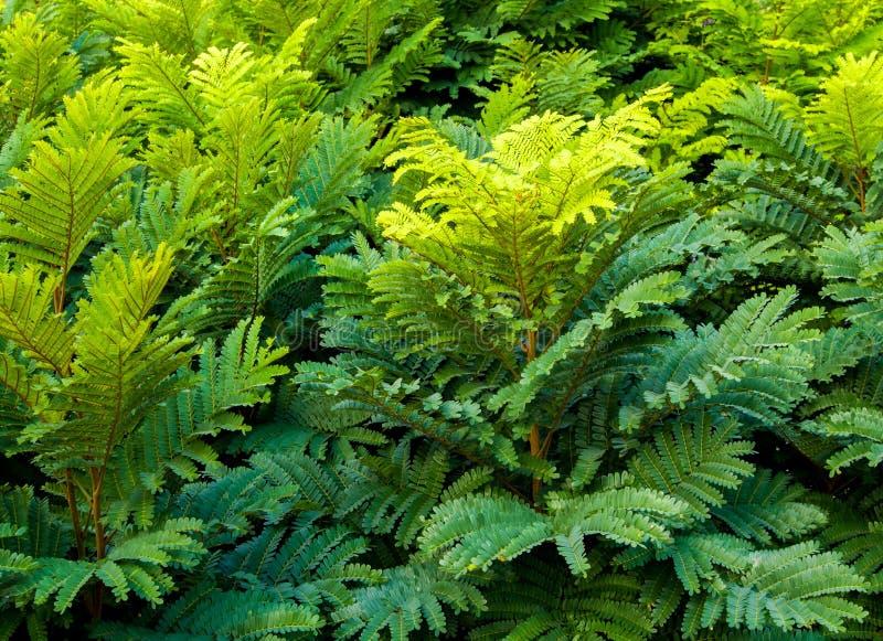 Incluso pinado hojas del compuesto de árboles foto de archivo