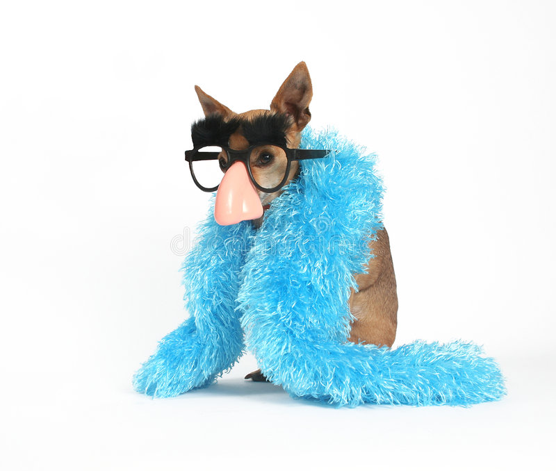 Incognito royalty free stock photo