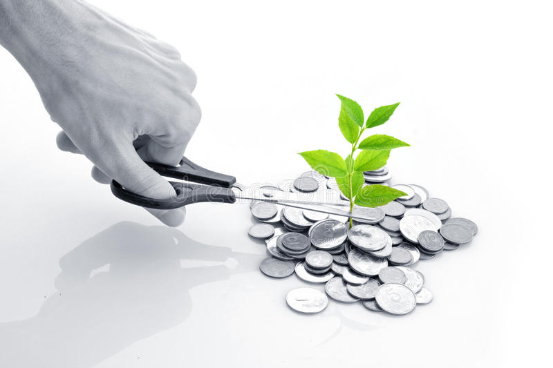 Income concept. Coins and plant, isolated on white background royalty free stock image